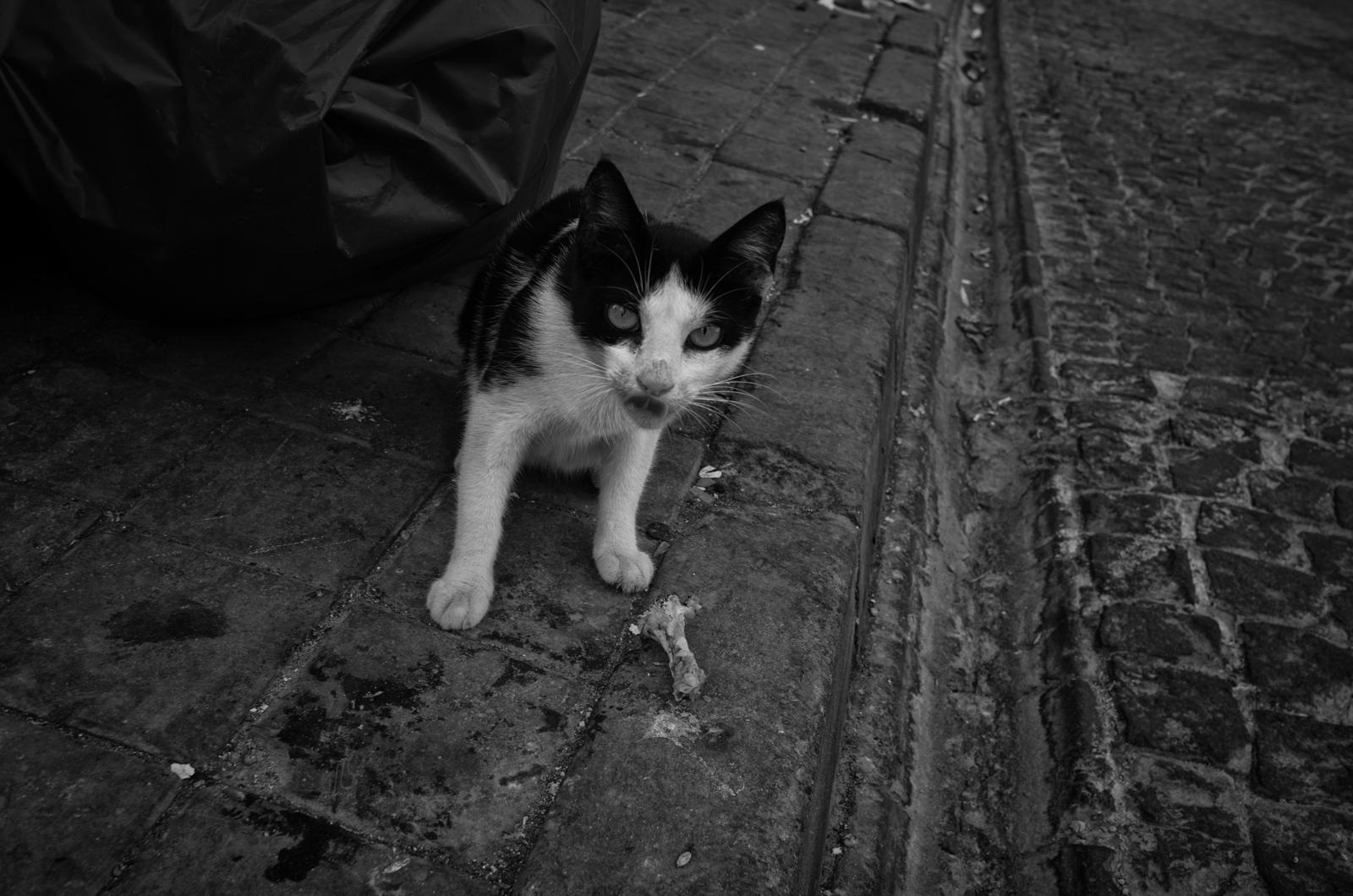 Die Katzen leben in Istabul auch gut