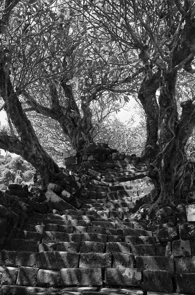Die Treppe unter den Bäumen